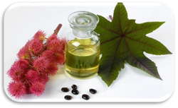 Castor_oil_commercial_grade_aura_refoils_india.jpg